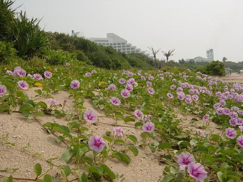 ホテルの前の砂浜