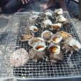 熱川の壷焼き&踊り食い